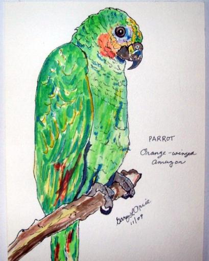"""Parrot Study"""