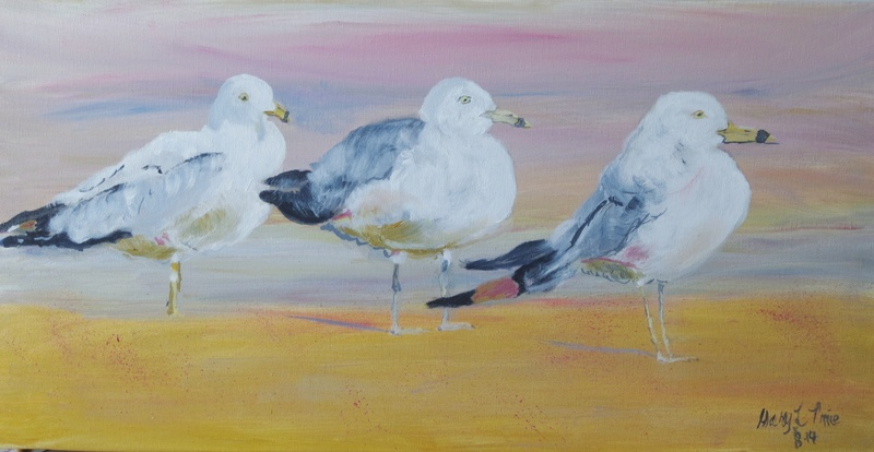 Ring-Billed Seagulls