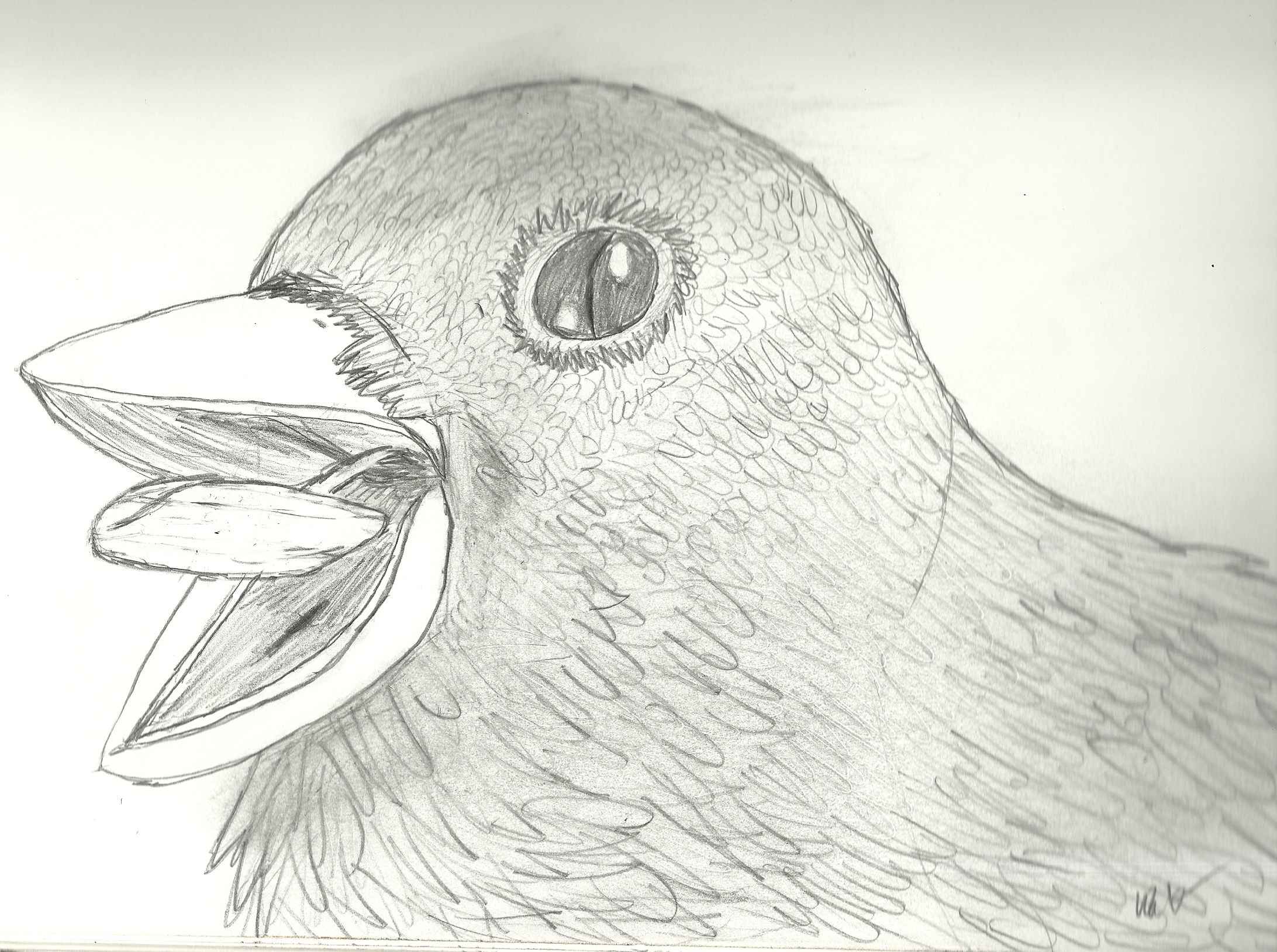 Sketch of a Bird
