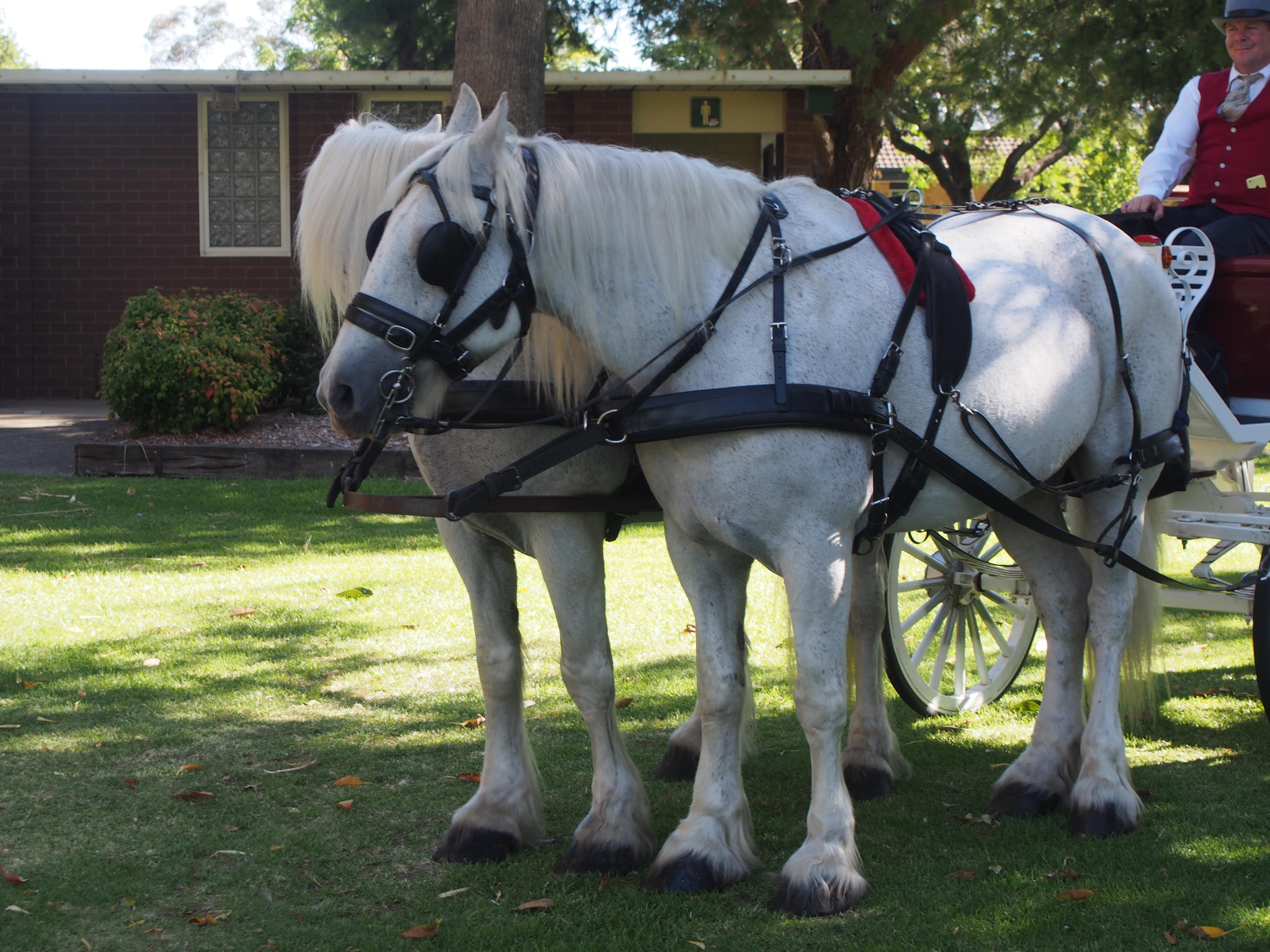 Etain: The Horses