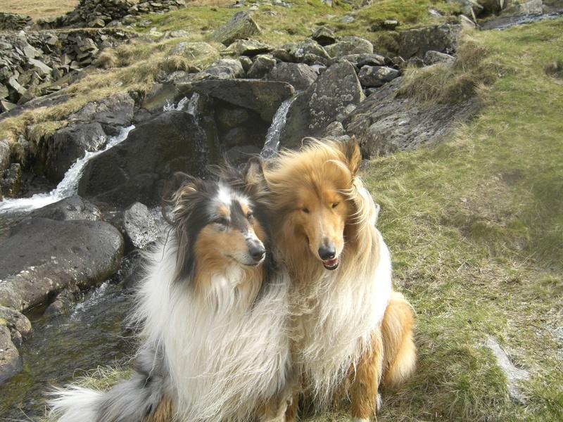 Lady and Jake