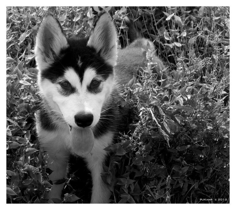 Shila at 2 months