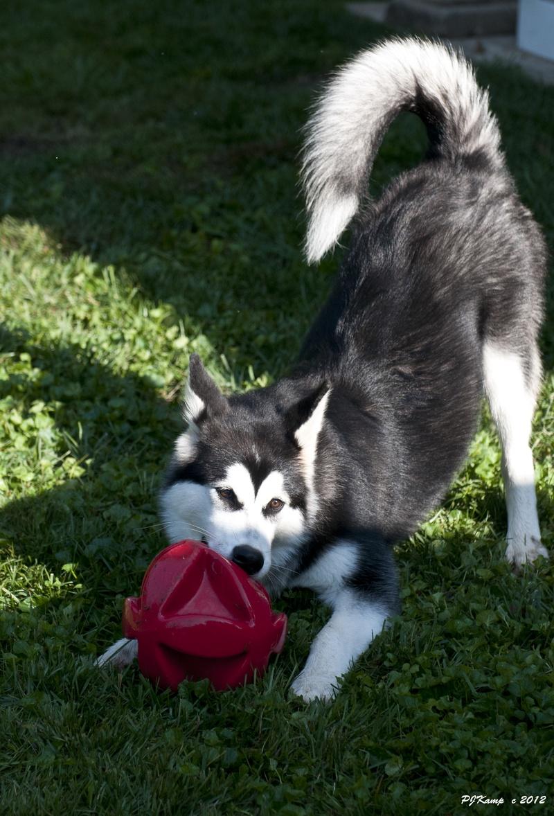 Shila's red ball
