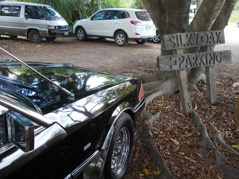 Silky Oak Club Run! DSCN0428