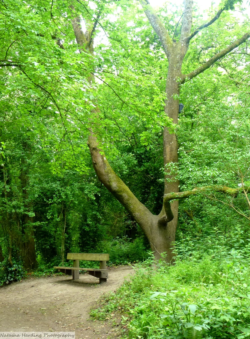 bench in decoy woods