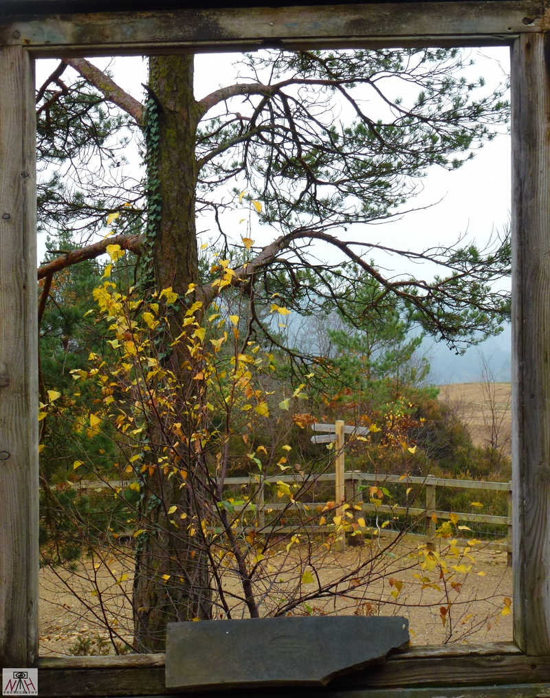 window of autumn