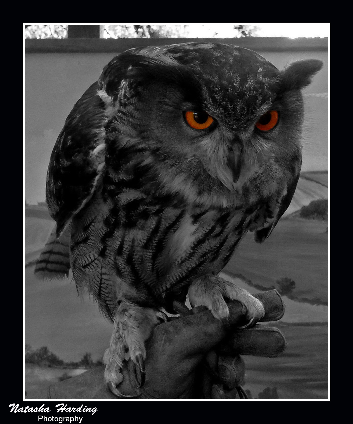 scary owl