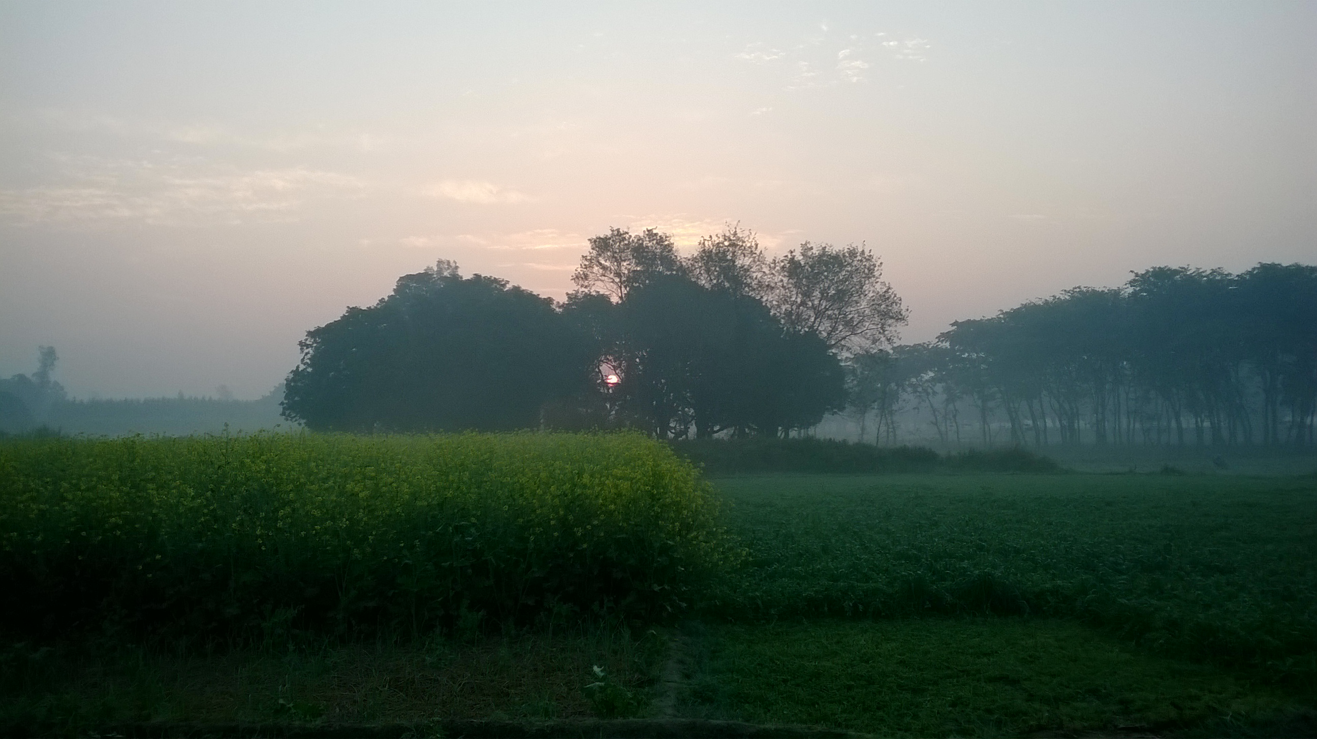 Early Morning @ Home