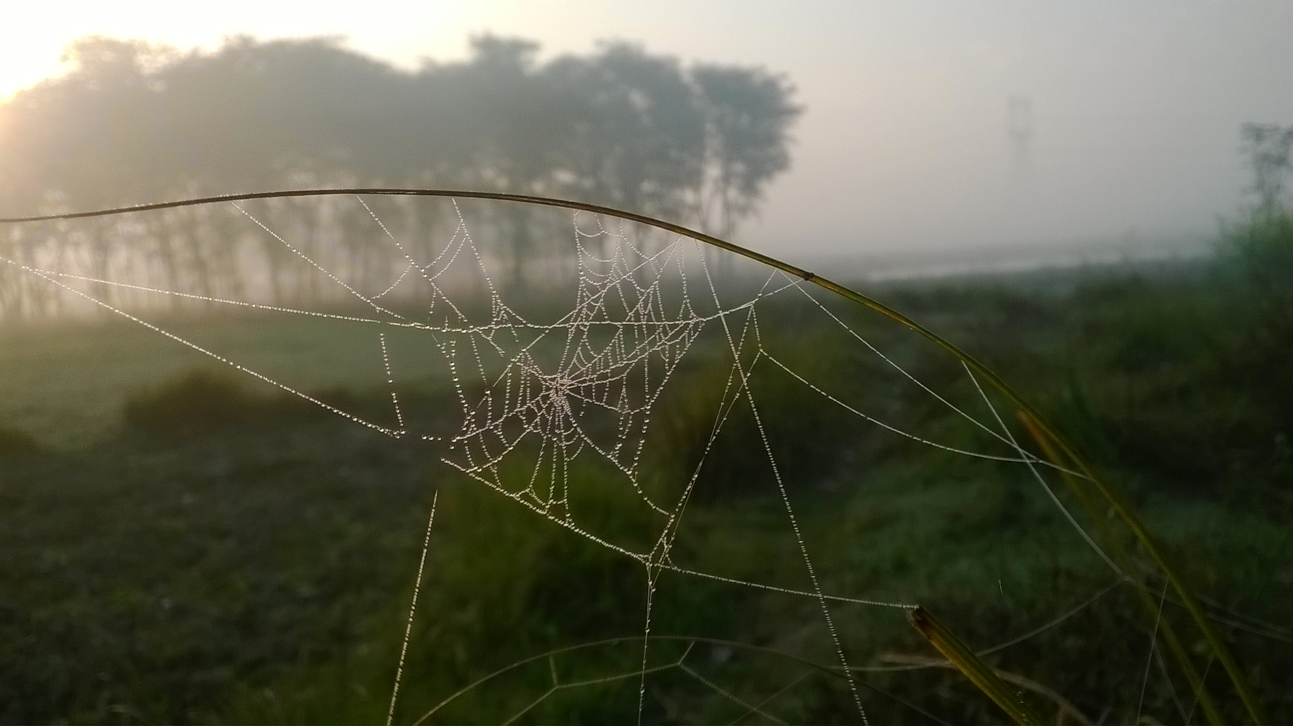Webs @ Early Morning
