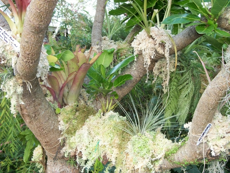 Close up of plants on epi tree