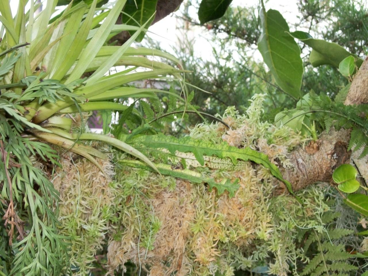plants on epi tree.