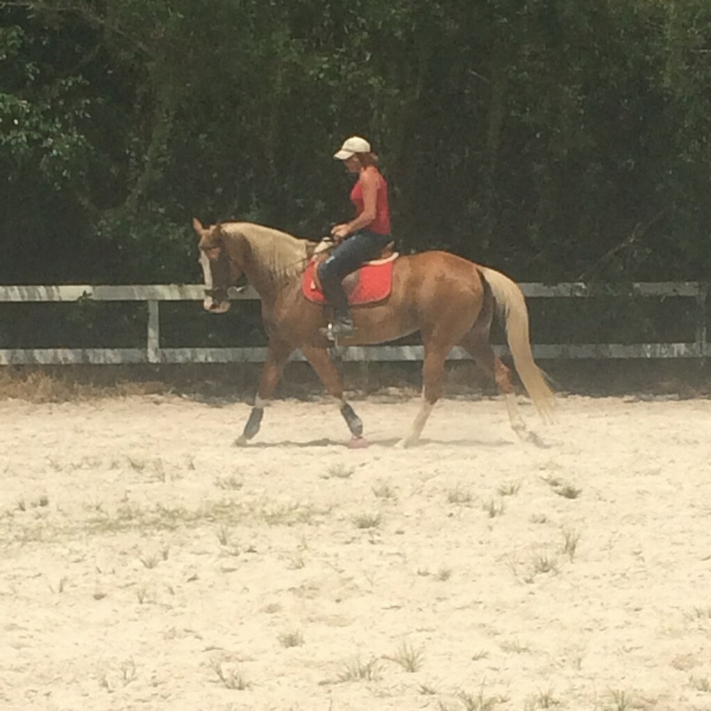 Western horse gone English.