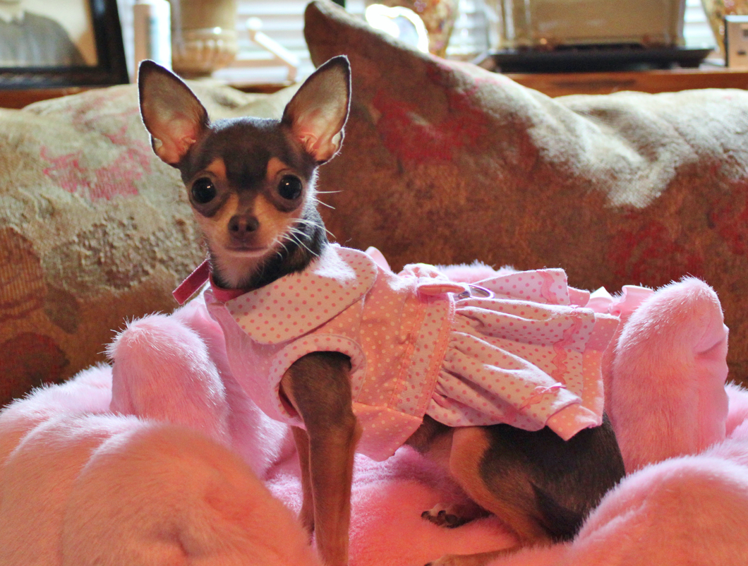 Chloe - pink princess 2