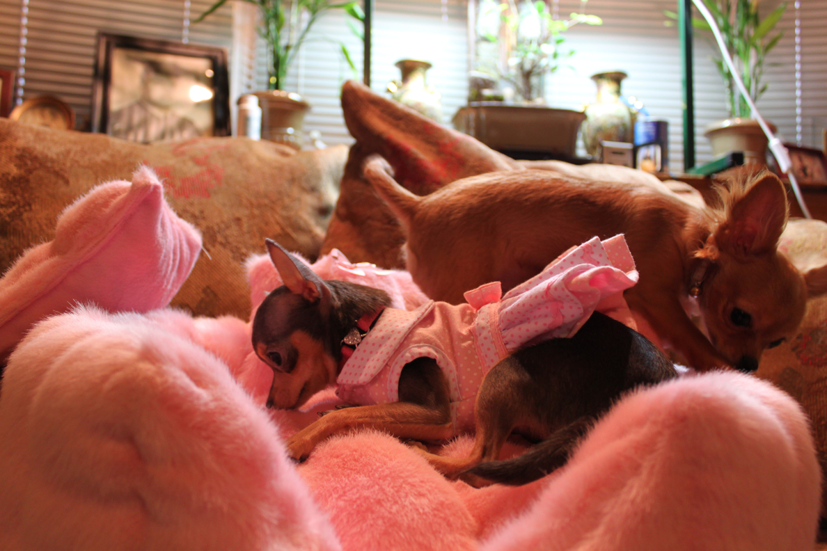 Chloe and Sunny - enjoying princess bed together
