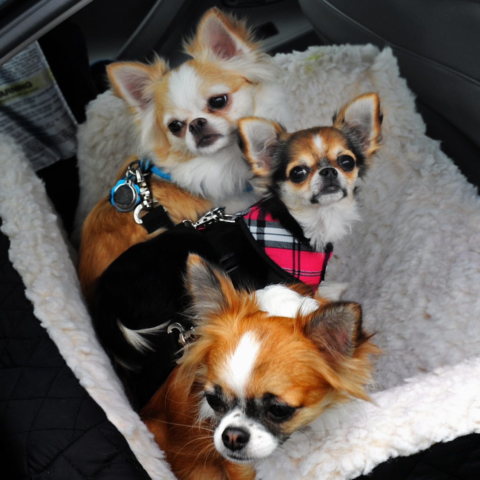Nikki, Gracie & Stella