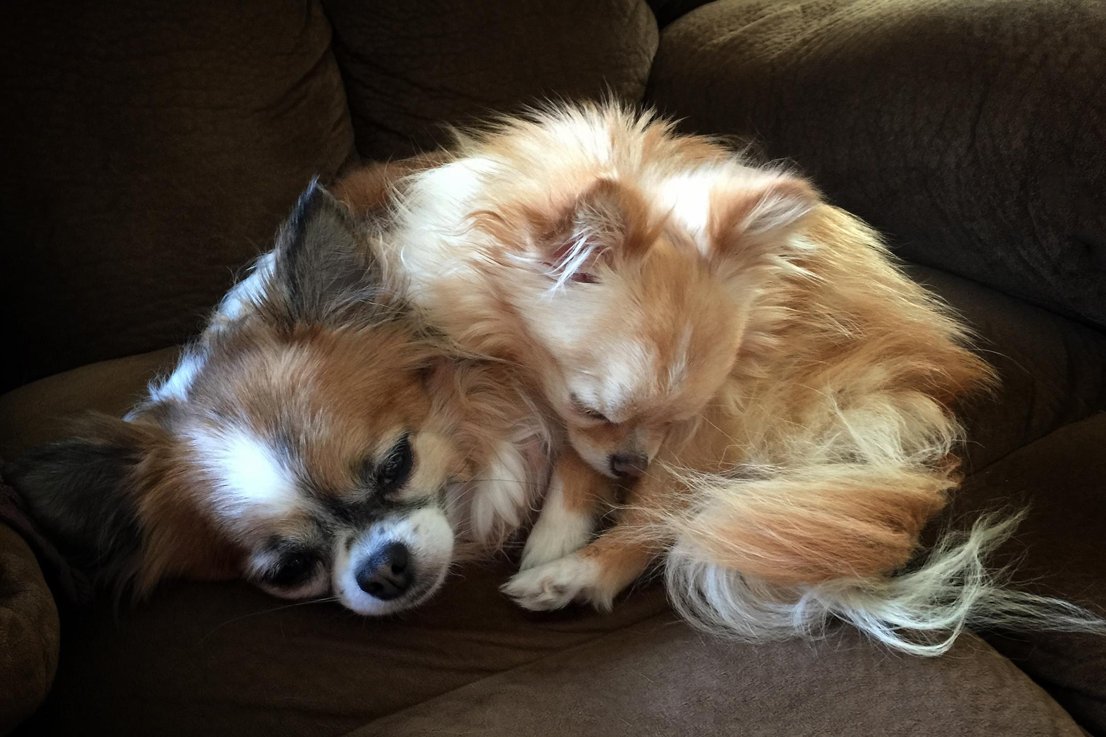 Hunny & Gracie