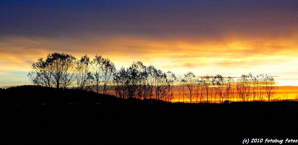 Trees against the sunrise