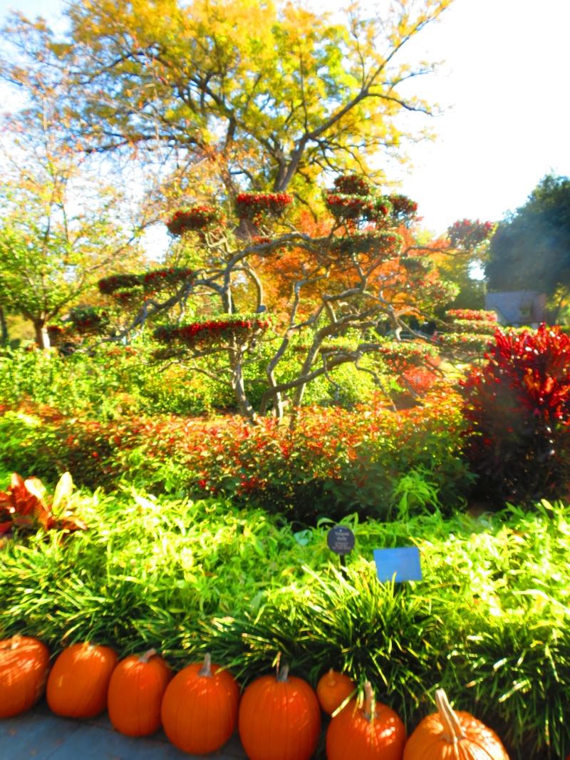 Dallas Arboretum Fall Festival