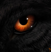 Canis the loner The%20black%20wolf%20with%20amber%20eyes