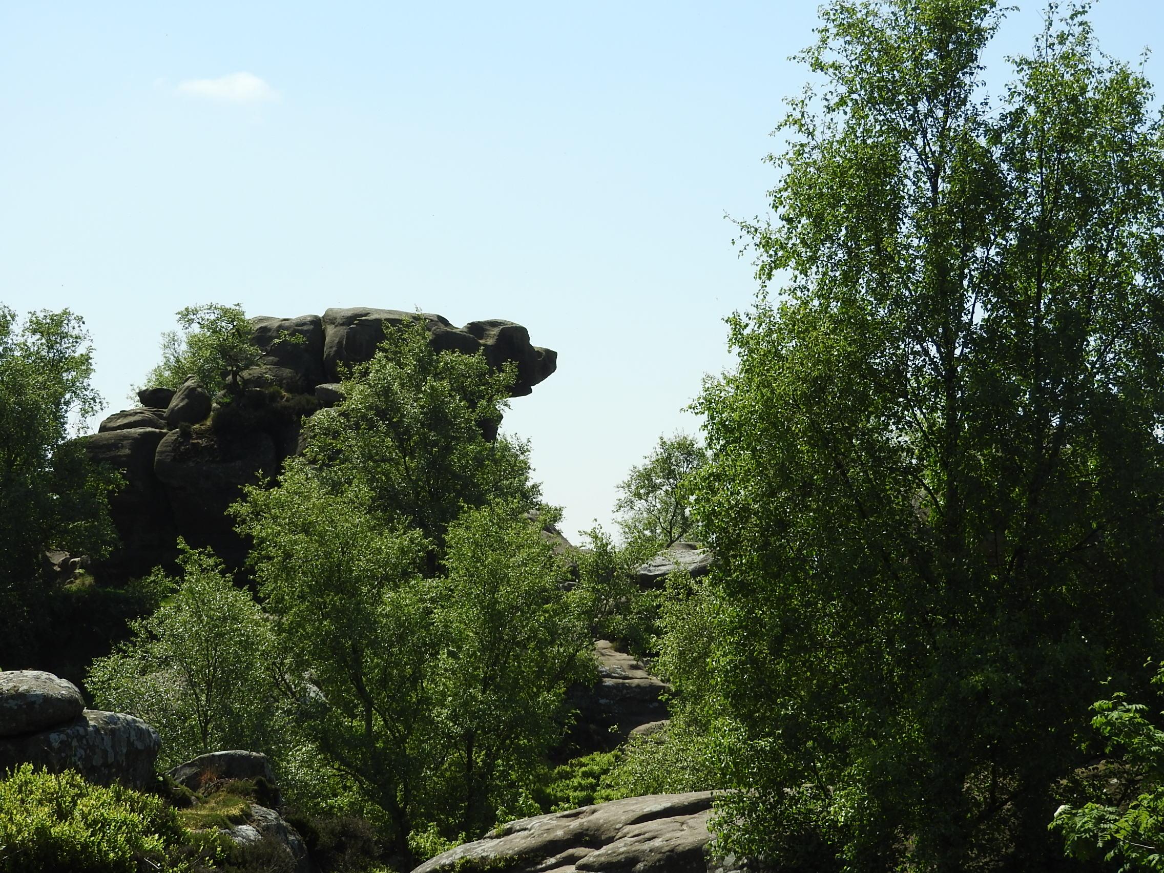 Brimham Rocks the guard dog