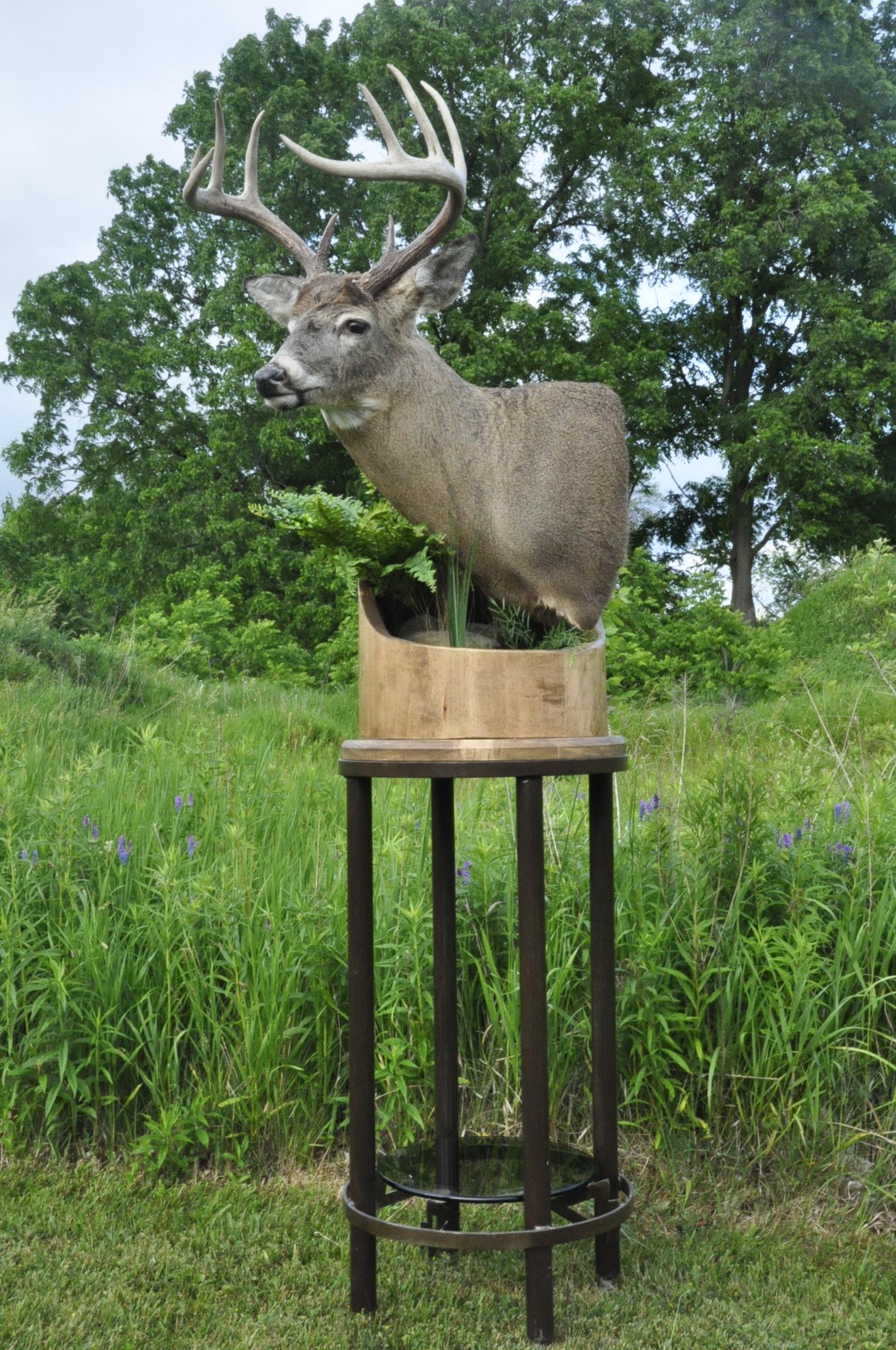 Buck on Floor Pedestal