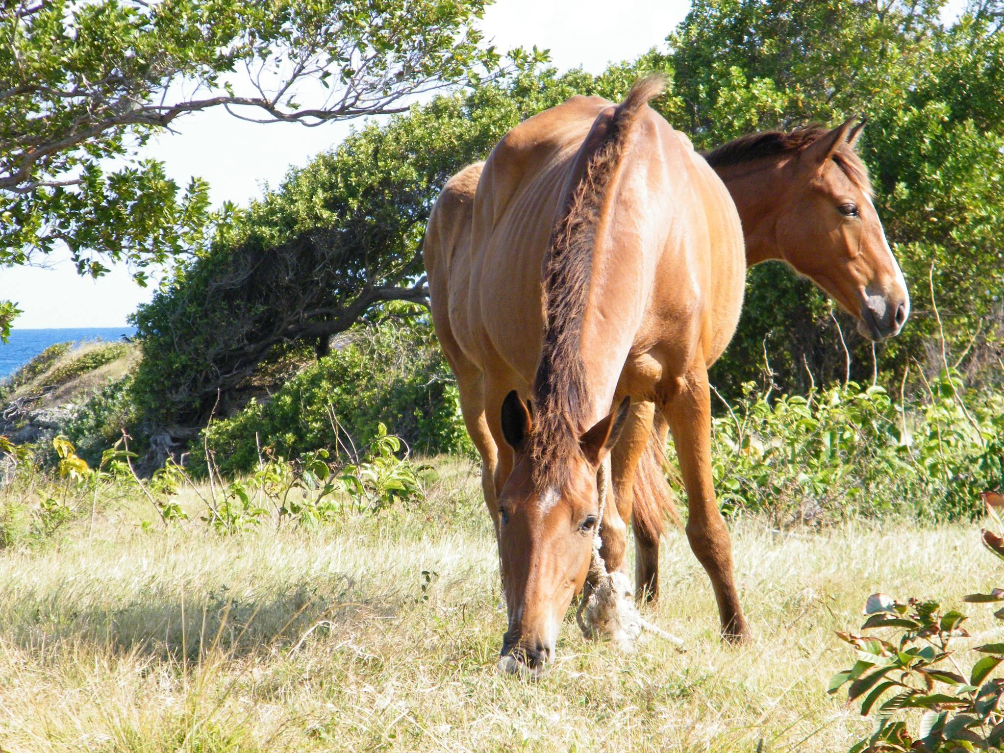 Horse(s)