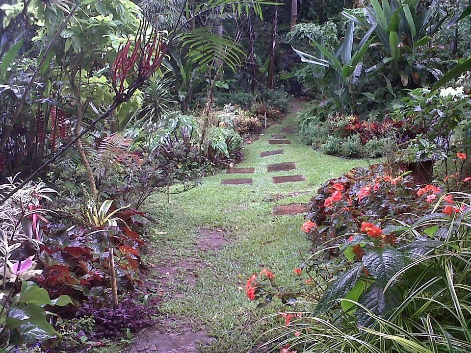 Garden Path in Trinidad