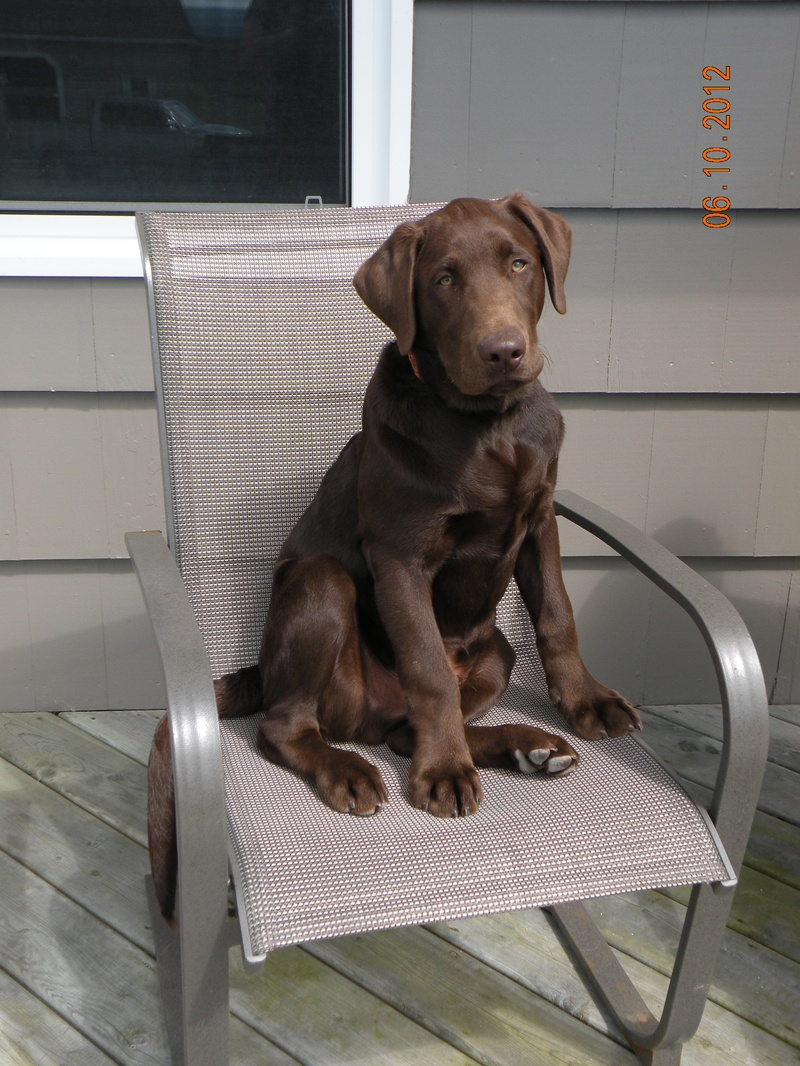 Jake claimed his own chair !