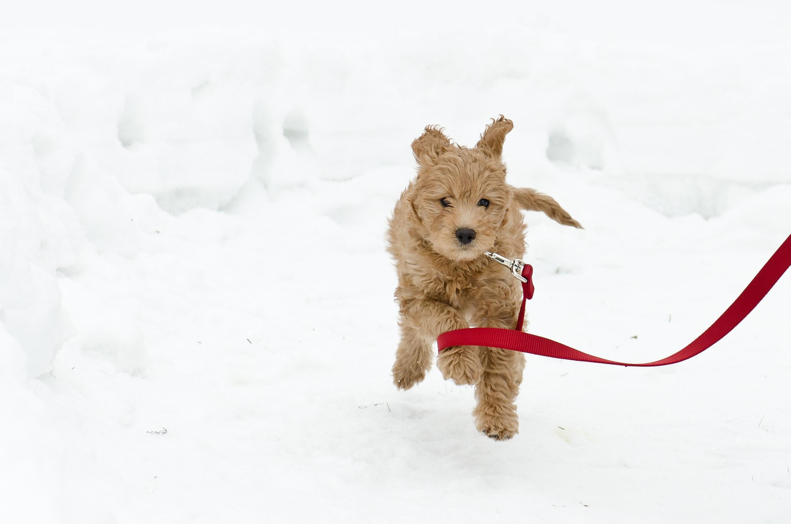 Maui loves the snow!