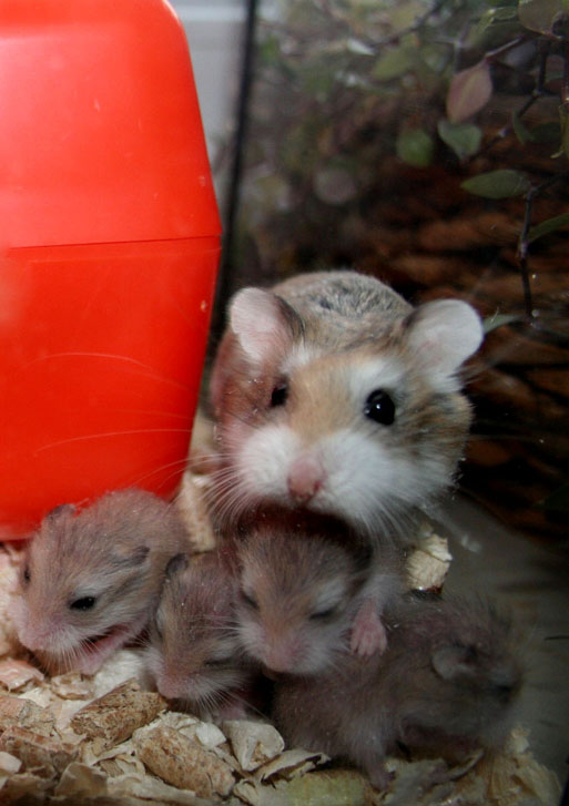 Pip and babies