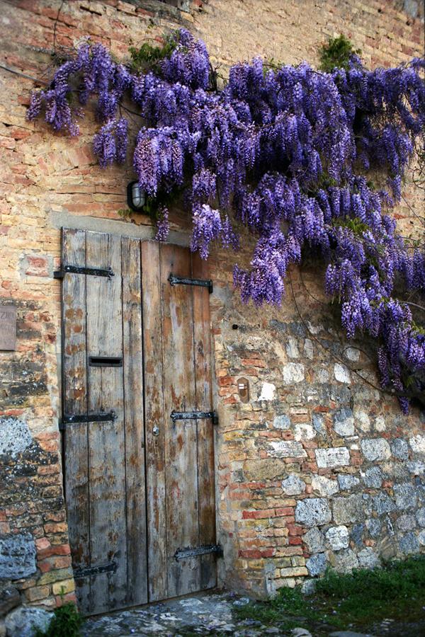 Tuscan Wisteria - New Hope Art League