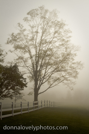 Foggy Tree and Fence