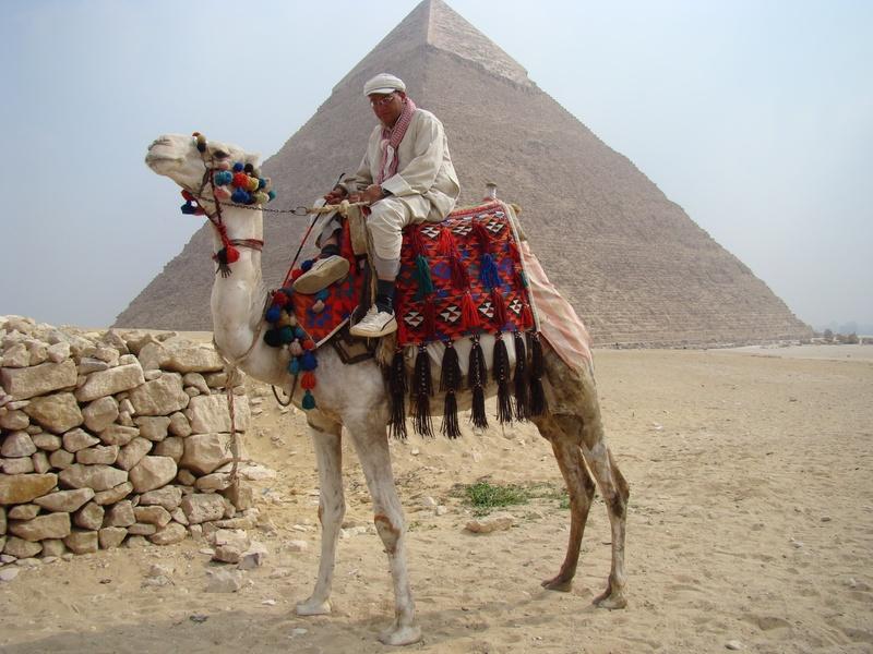 Camello en las Piramides