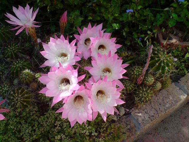 Flowers overnight - 1 night only