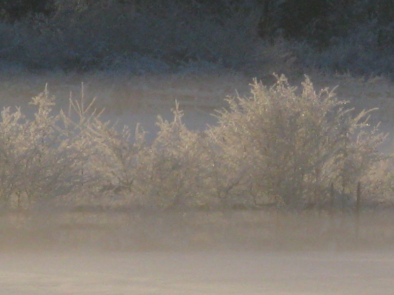 Pretty frosty trees.