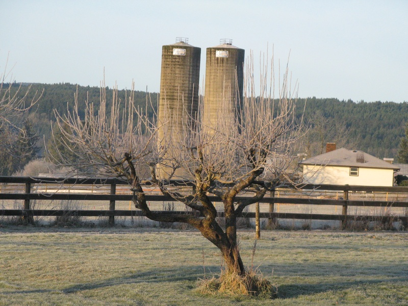First hard frost of winter.