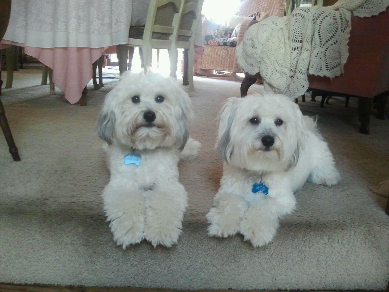 Chesteosr and Reilly -18 mo