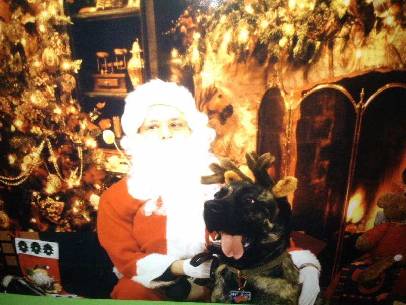 Santa's mastiff reindeer