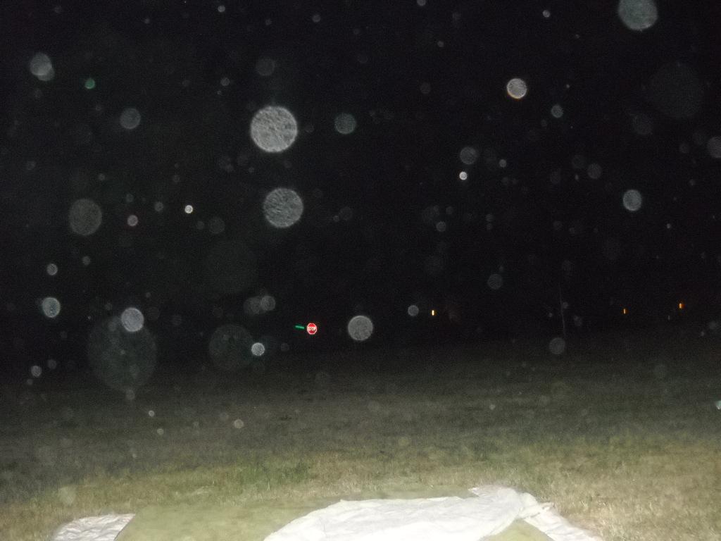 Orbs in backyard 3