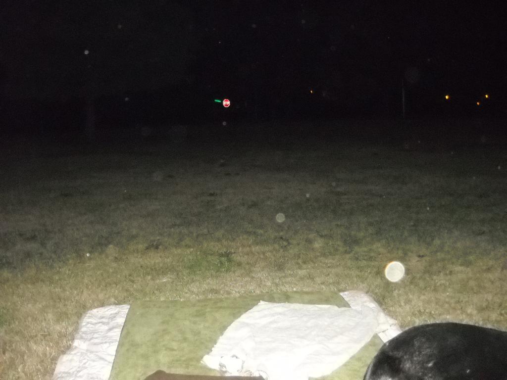 Orbs in backyard 6