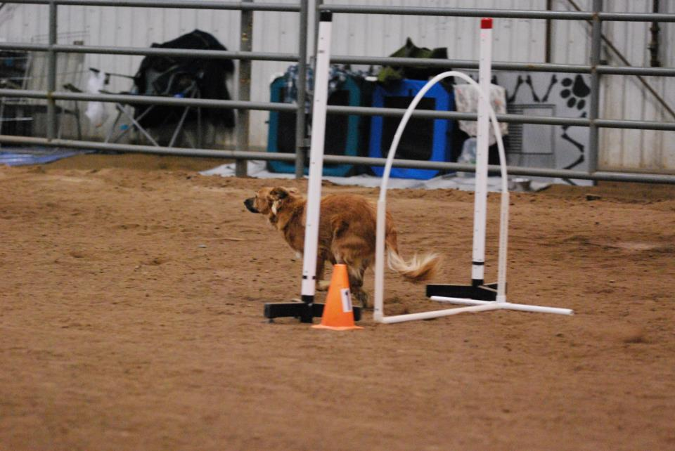 Taking off on a NADAC agility course