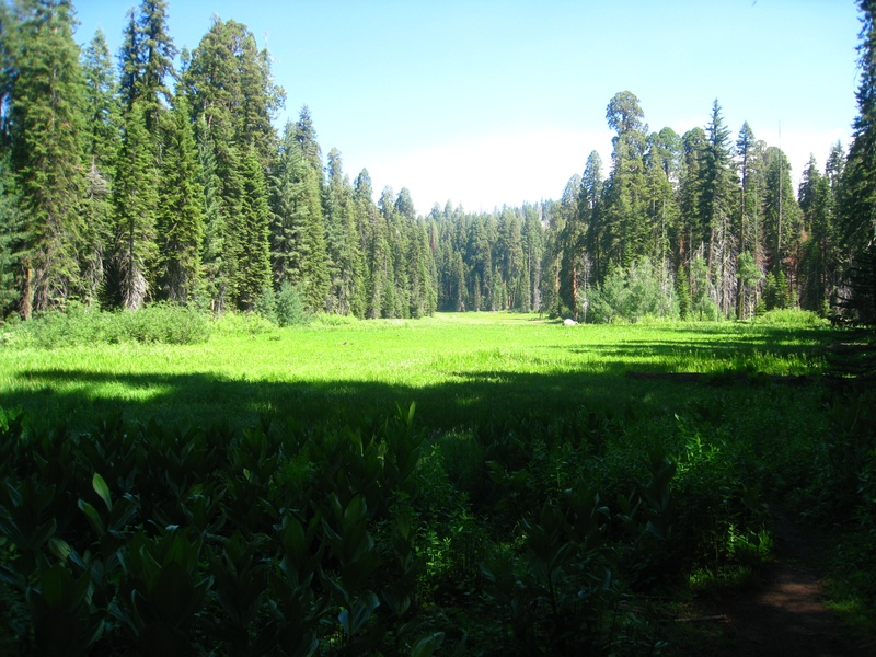 Crescent Meadow - Sequoia Park