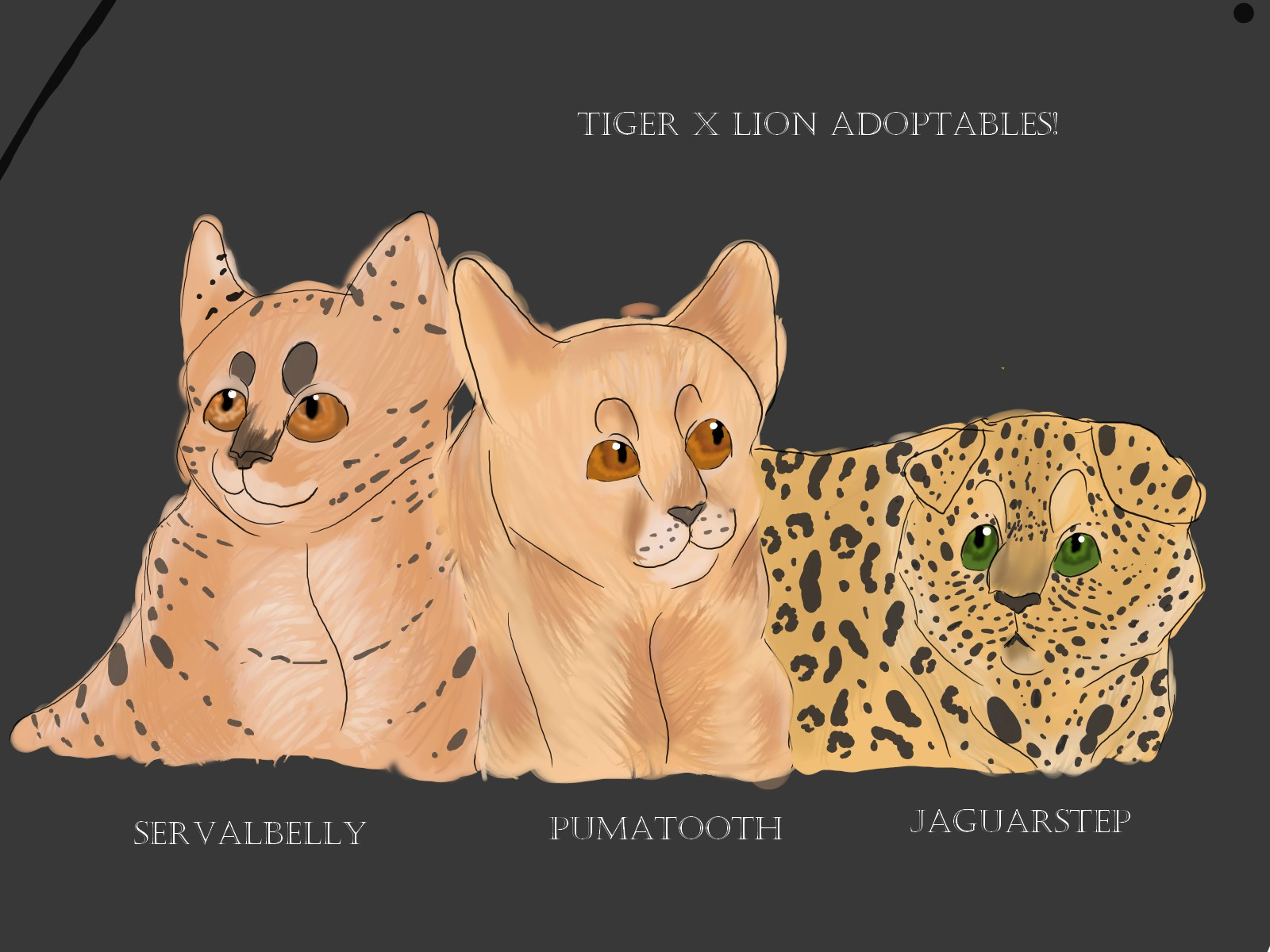 Tigerfield x Lionheart Adoptables 1/2 ( Closed )