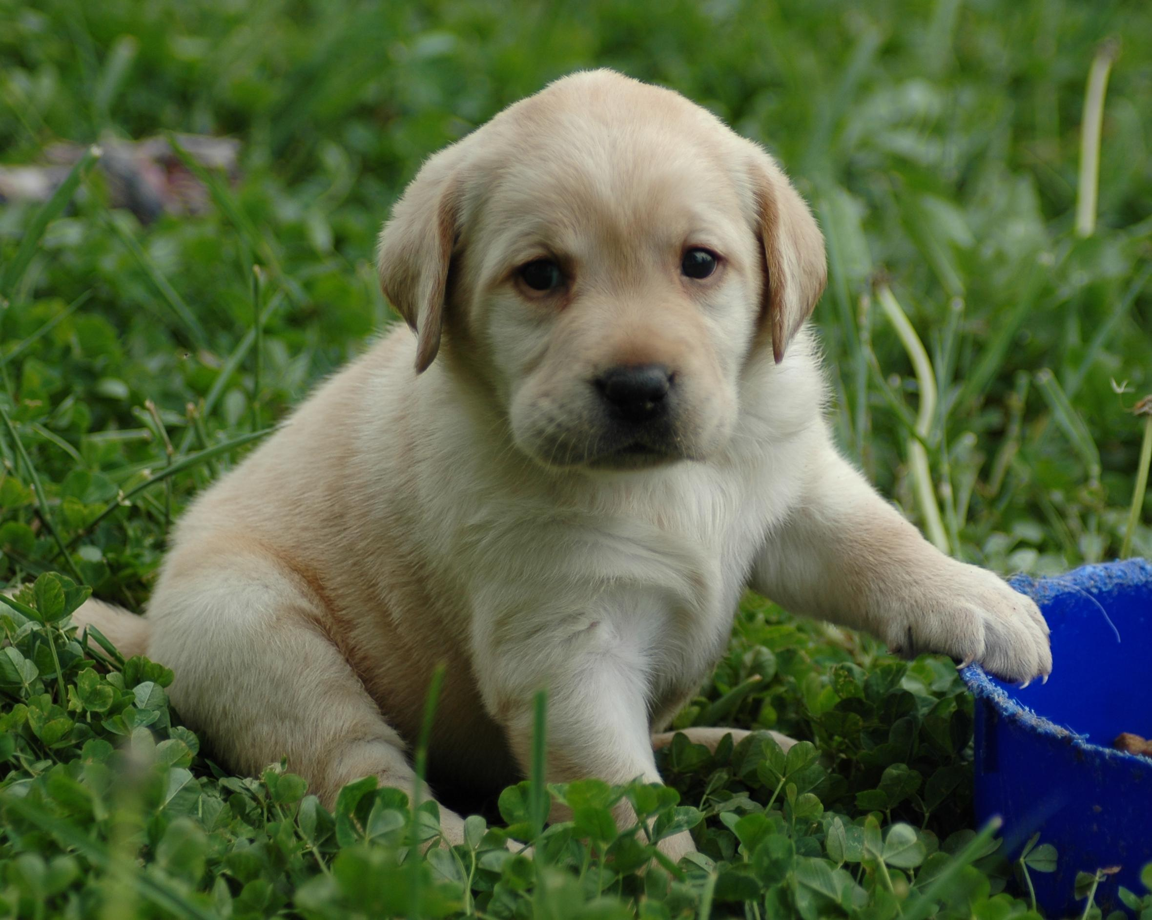 Puppies!!!!! | Publish with Glogster!