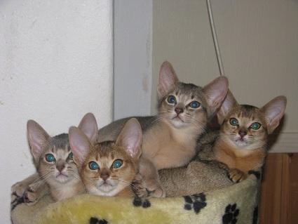 Alle fire, Imala, Indiana ,isildur og Iliana