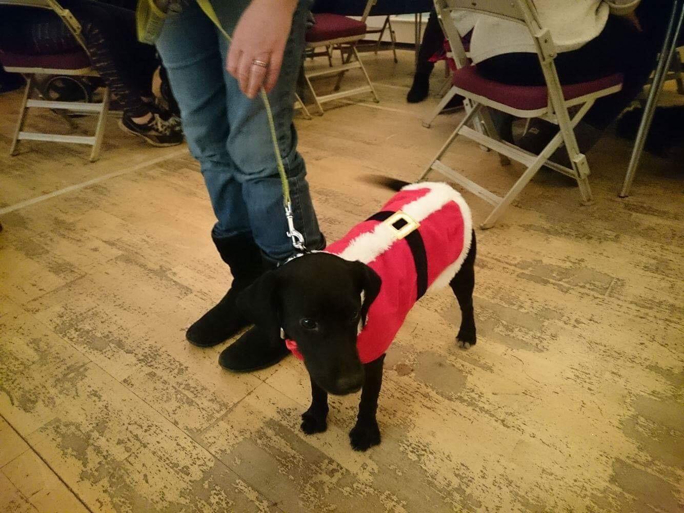 dog fancy dress