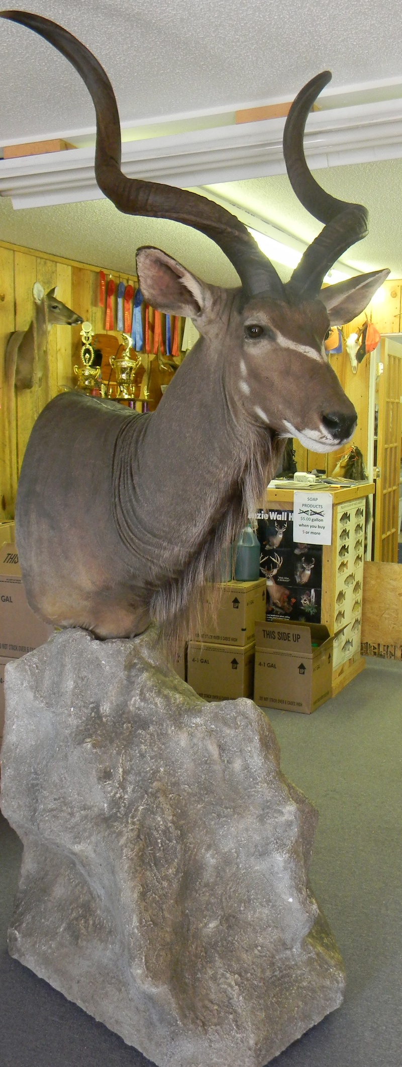 GREATER KUDU with ROCK BASE $1800.00