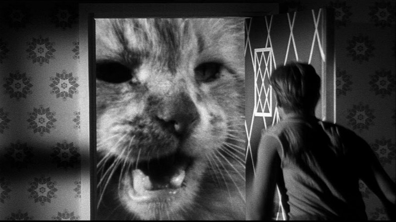 The Incredible Shrinking Man (Jack Arnold, 1957)